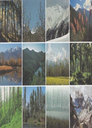 Himalayas:Trees&Forests